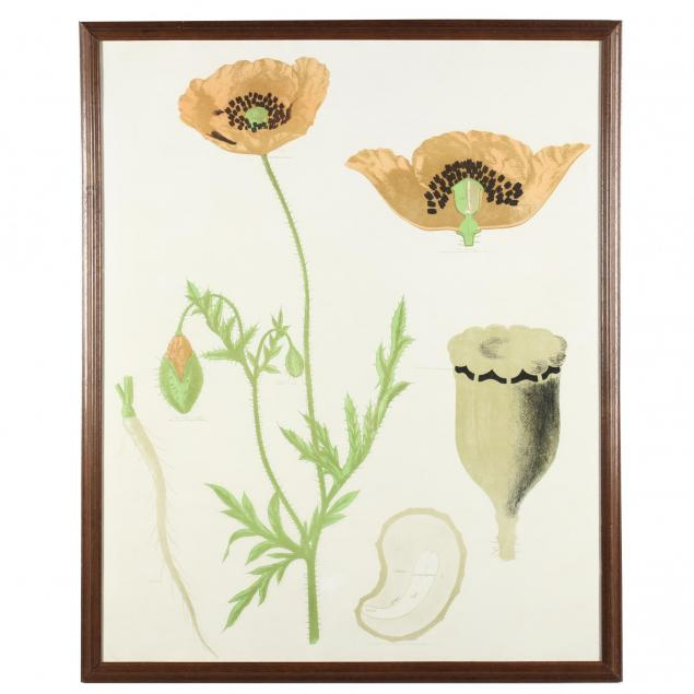 vintage-french-educational-print-of-poppies