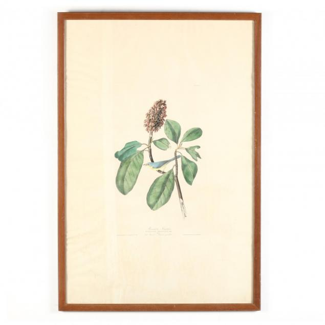 after-john-james-audubon-american-1785-1851-i-bonaparte-s-flycatcher-i