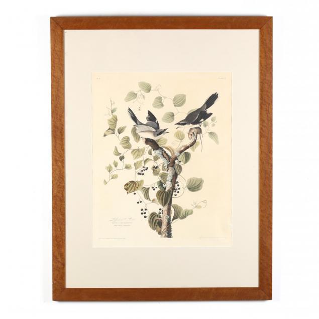 after-john-james-audubon-american-1785-1851-i-loggerhead-shrike-i