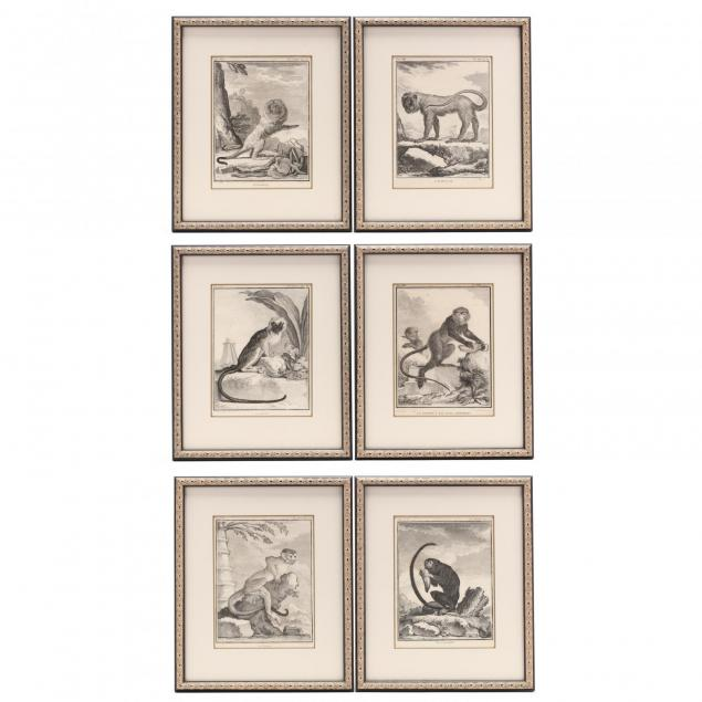 group-of-6-primate-engravings-from-buffon-s-i-histoire-naturelle-i