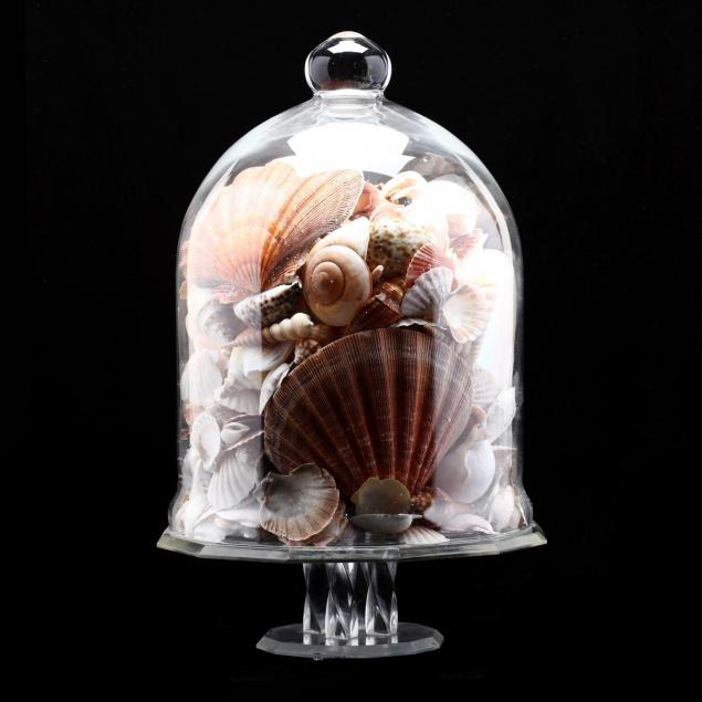 glass-cloche-with-seashell-collection