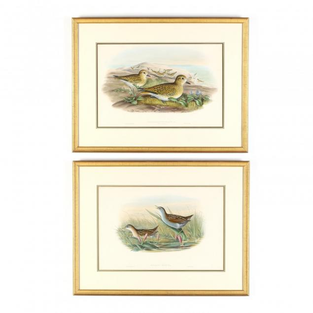 j-gould-h-c-richter-19th-century-two-works-from-i-the-birds-of-great-britain-i