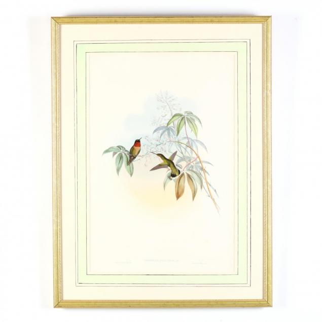gould-and-richter-hummingbird-lithograph-trochilus-colubris