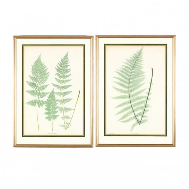 thomas-moore-british-1821-1887-two-works-from-i-ferns-of-great-britain-and-ireland-i