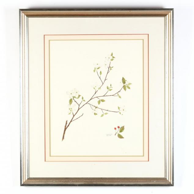 mari-m-conneen-fl-i-flowering-dogwood-cornus-florida-i