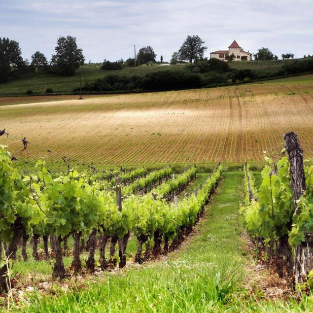 chateau-rieussec-vintage-2009