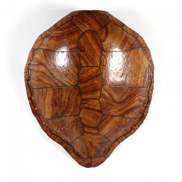 painted-wall-mount-faux-sea-turtle-shell