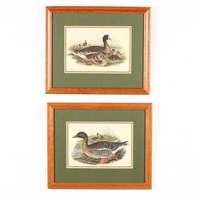 pair-of-framed-ornithological-prints
