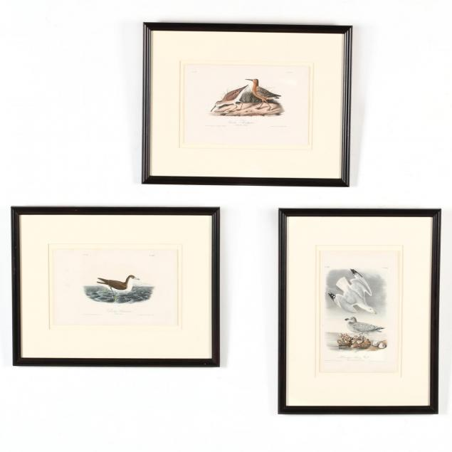 after-john-james-audubon-american-1785-1851-three-framed-prints-from-i-birds-of-america-i