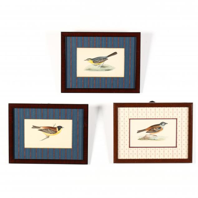 three-antique-ornithological-lithographs
