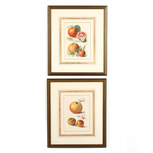 pair-of-framed-fruit-chromolithographs