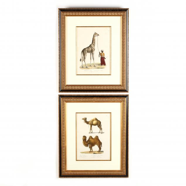 karl-joseph-brodtmann-swiss-1787-1862-two-prints-with-camels-and-a-giraffe