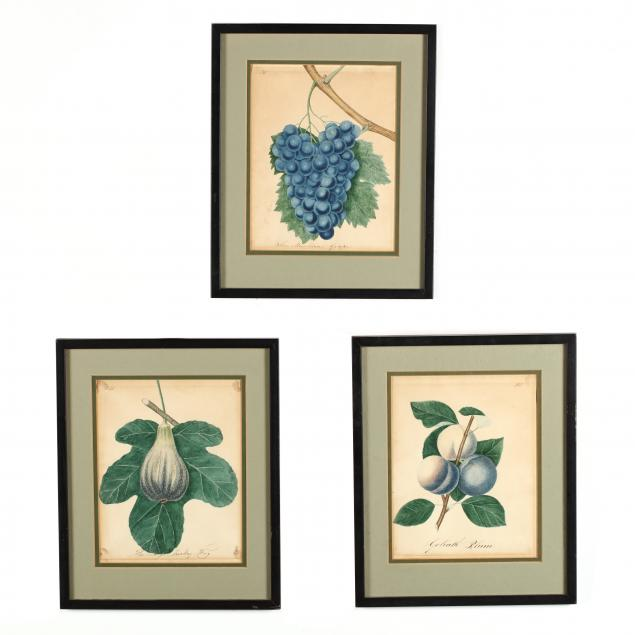 james-veitch-scottish-1792-1863-three-illustrations-of-fruits