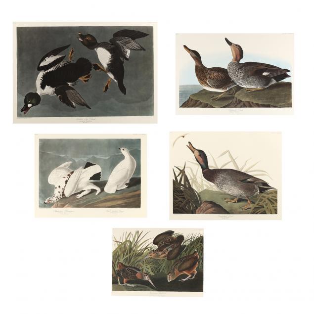 after-john-james-audubon-american-1785-1851-five-ornithological-prints