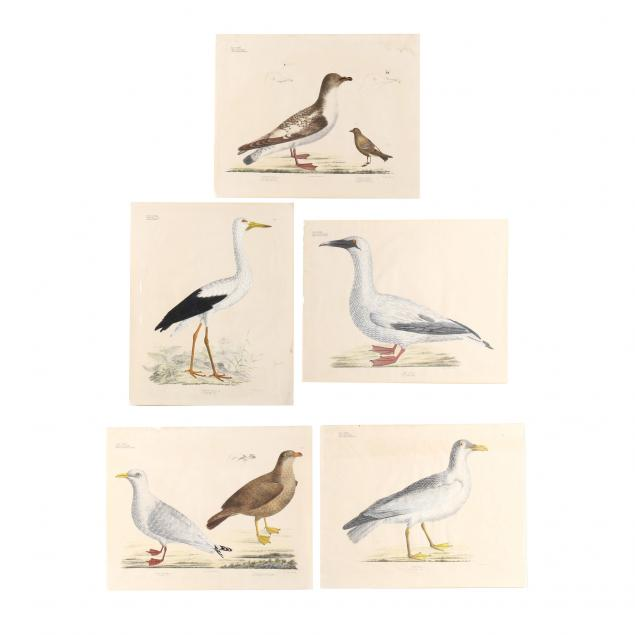five-original-georg-august-goldfuss-avian-lithographs-from-his-i-naturalist-atlas-i