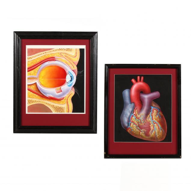 alex-grey-american-b-1953-two-anatomical-works