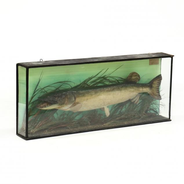 victorian-fish-diorama-of-a-pike