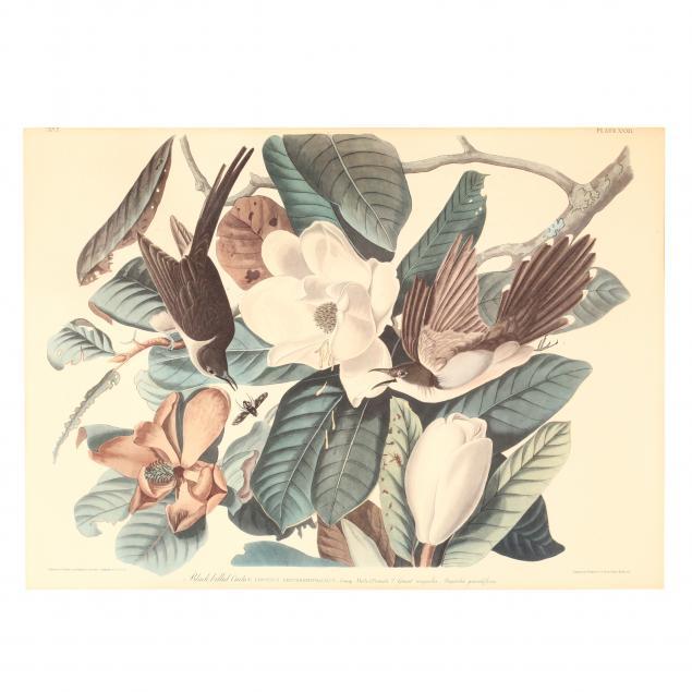 print-after-audubon-s-black-billed-cuckoo