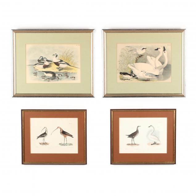 four-antique-waterfowl-prints
