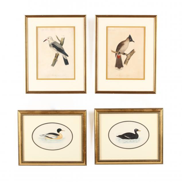 four-antique-ornithological-prints