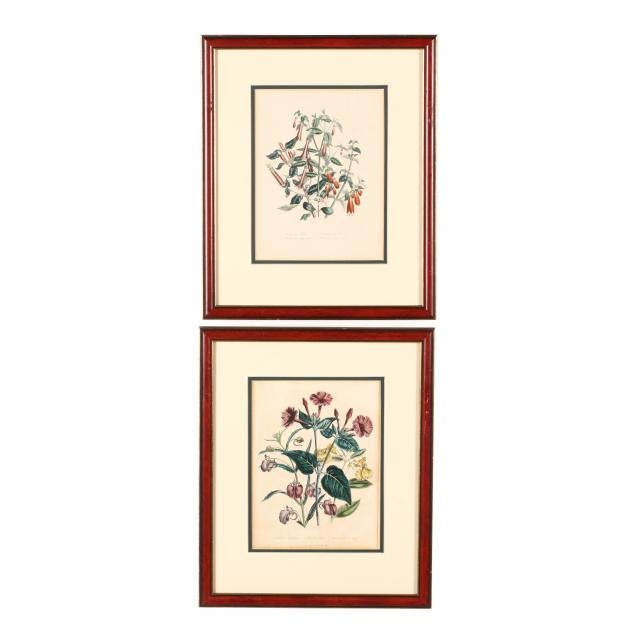 two-prints-from-jane-loudon-s-i-the-ladies-flower-garden-of-ornamental-perennials-i
