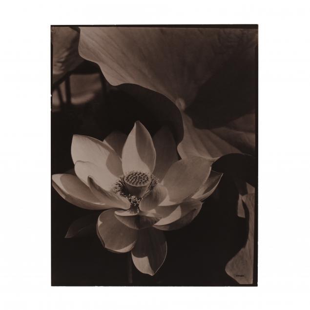 edward-steichen-american-1879-1973-i-lotus-mt-kisco-new-york-i