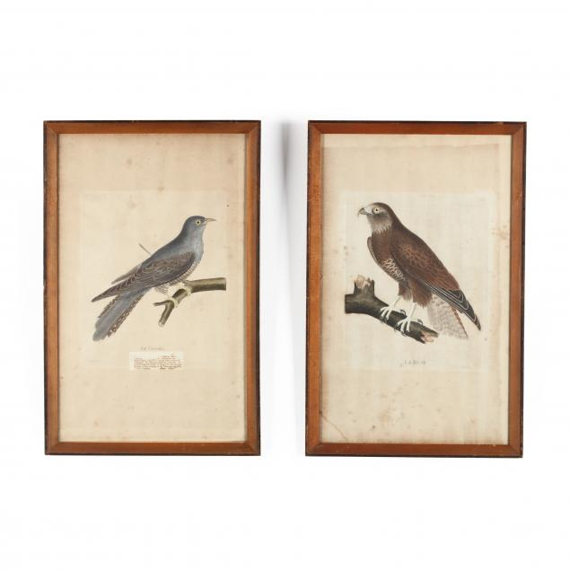two-antique-ornithological-engravings
