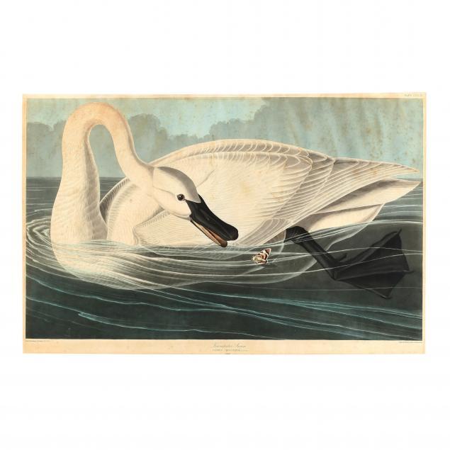 john-james-audubon-american-1785-1851-i-trumpeter-swan-i-havell-edition