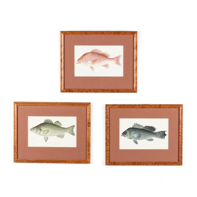 sherman-foote-denton-ny-1856-1937-three-fish-chromolithographs