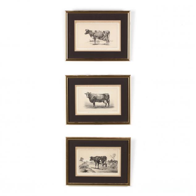 julius-bien-co-19th-century-three-antique-cow-lithographs