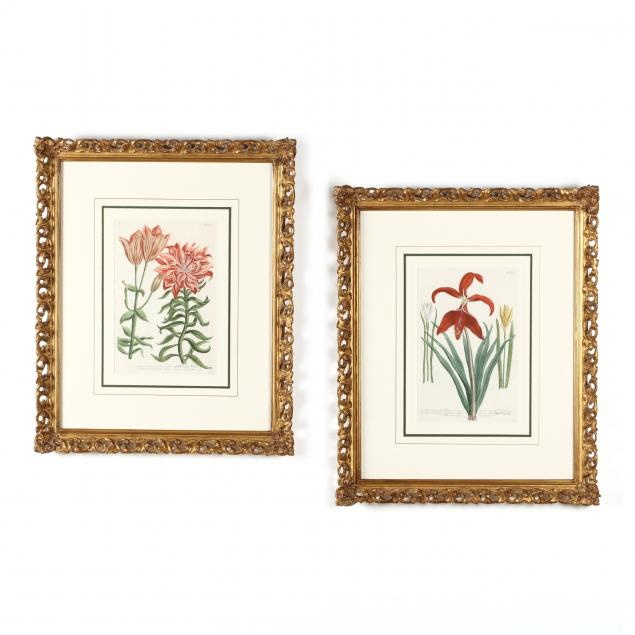 pair-of-18th-century-lily-engravings-from-johann-weinmann-s-i-phytanthoza-iconographia-i