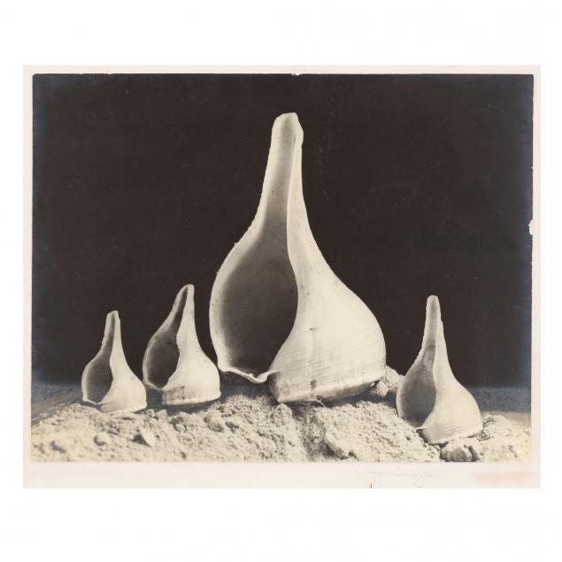 imogen-cunningham-american-1883-1976-four-shells