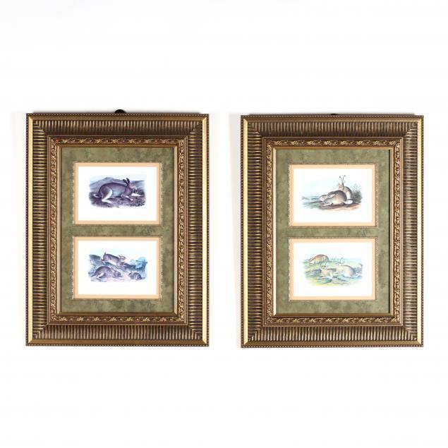 two-framed-decorative-rabbit-prints-after-audubon