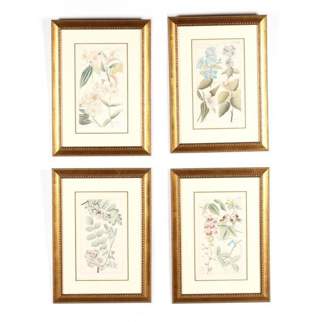 david-dietrich-1799-1888-four-botanical-engravings