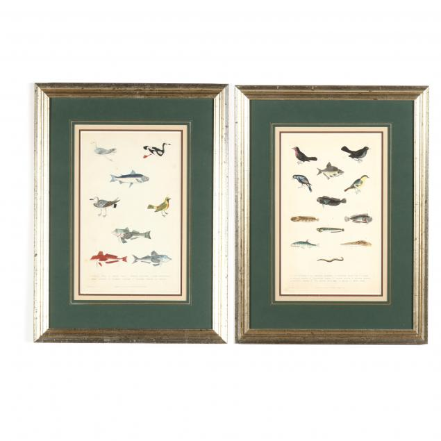 two-antique-fish-and-bird-prints-from-martyn-s-i-a-new-dictionary-of-natural-history-i