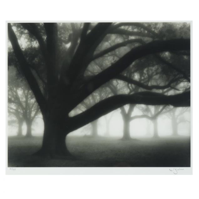 william-guion-la-i-oak-grove-in-fog-audubon-park-new-orleans-i
