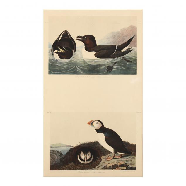 after-john-james-audubon-american-1785-1851-i-razor-billed-auk-i-and-i-puffin-i-bien-edition-double-plate
