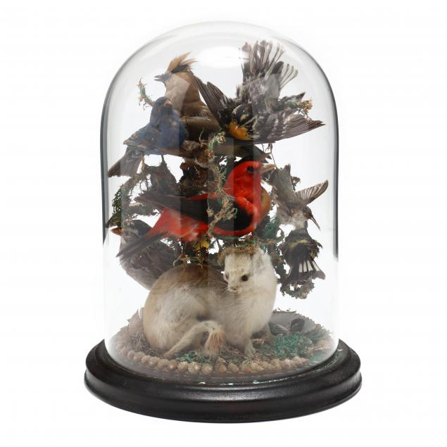 antique-taxidermy-of-birds-and-weasel-with-cloche