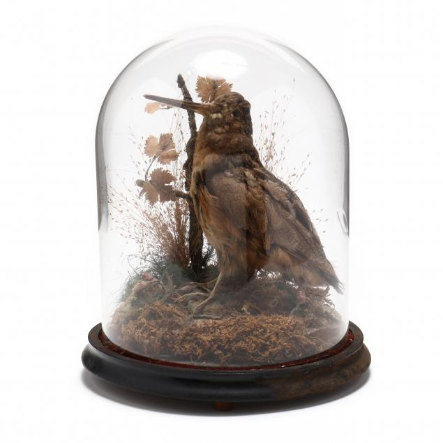 antique-taxidermy-of-snipe-with-cloche