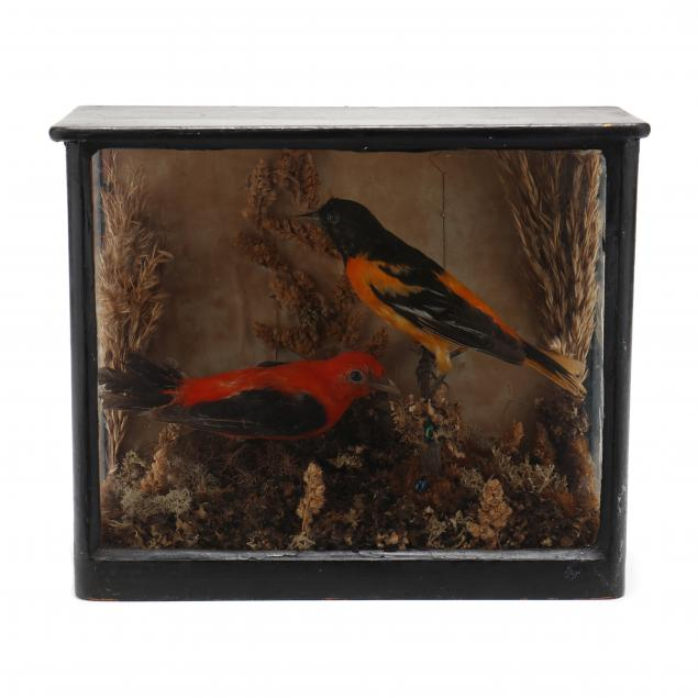 antique-taxidermy-of-songbird-pair-in-shadowbox