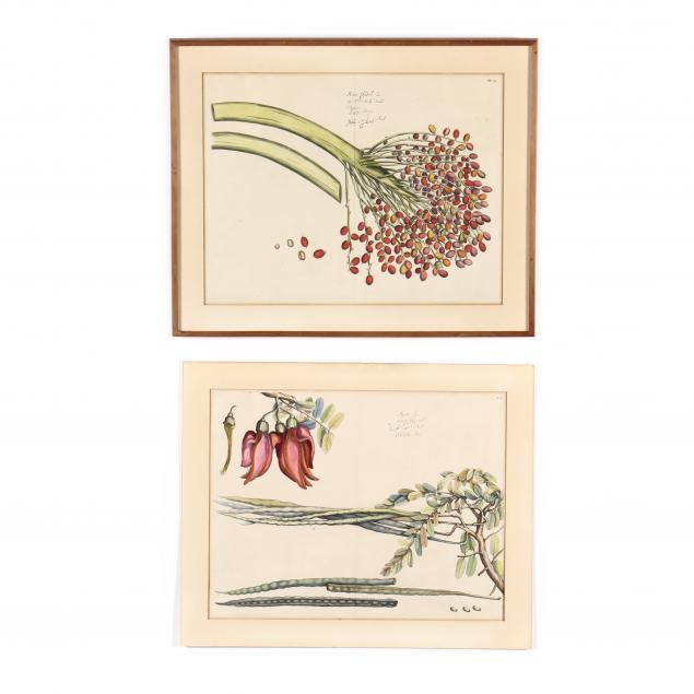 hendrick-adriaan-van-rheede-dutch-circa-1637-1691-two-botanical-prints-from-i-hortus-malabaricus-garden-of-malabar-i
