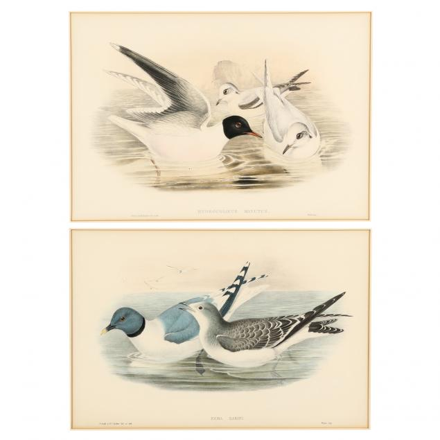 gould-and-richter-british-19th-century-two-framed-prints-of-gulls