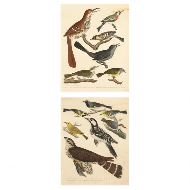 two-antique-prints-from-alexander-wilson-s-american-ornithology