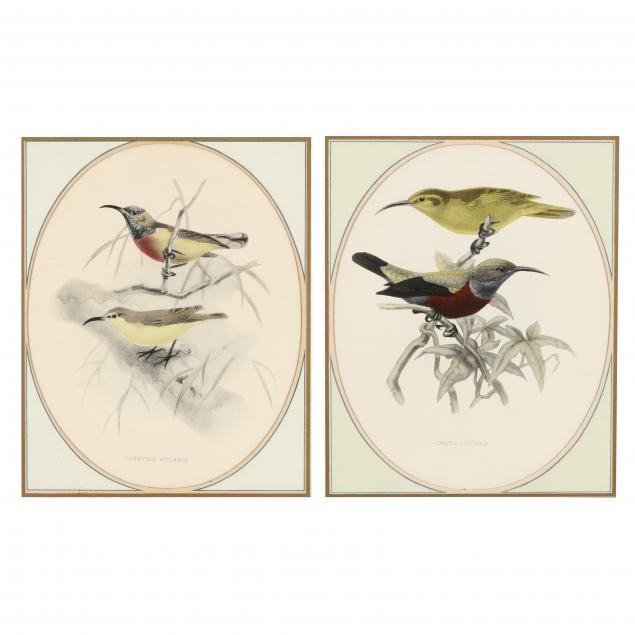 pair-of-framed-bird-prints