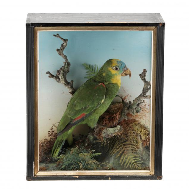 antique-parrot-diorama-under-glass