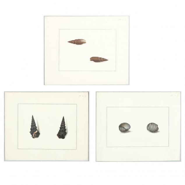 thomas-martyn-british-1716-1860-four-works-from-i-figures-of-nondescript-shells-collected-in-different-voyages-in-the-south-seas-i