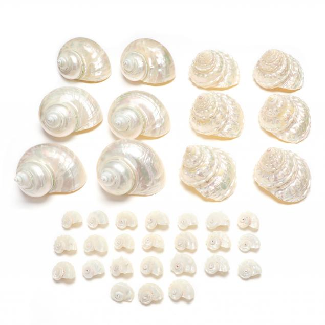 group-of-pearled-trochus-and-turban-shells