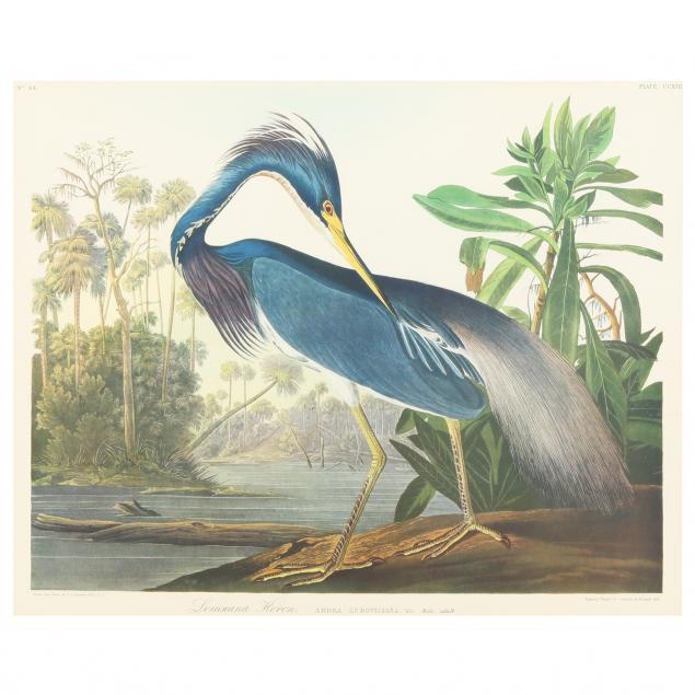 framed-print-after-audubon-s-i-louisiana-heron-i